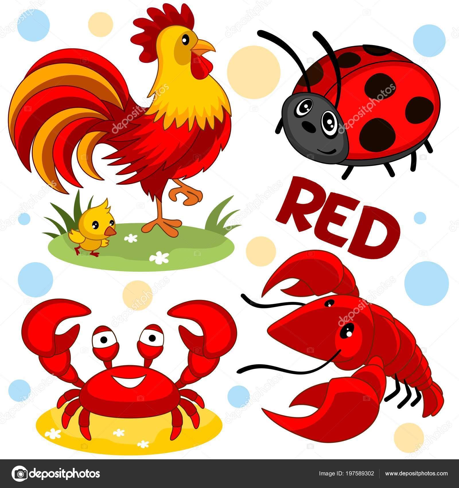 Conjunto Salvajes Animales Domésticos Insectos Color Rojo Para Niños ...