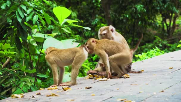 a family of monkeys in a rainforest. The natural habitat of monkeys.