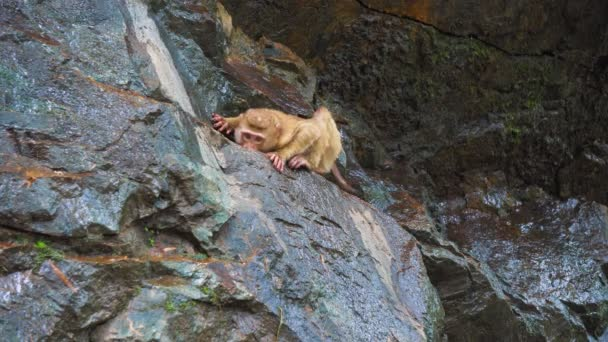 a monkey on a rocky rock. tropical forest with monkeys. natural habitat