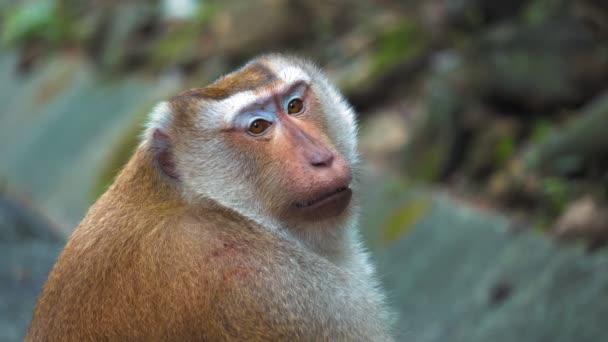 arc egy majom Close-Up portré. a majom ül és nézi a kamerát a parkban.