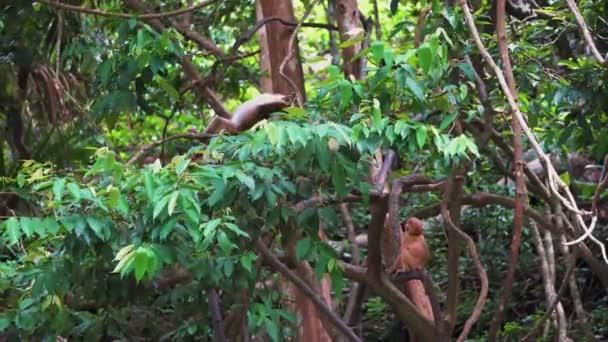 scimmie arrampicano sugli alberi della foresta pluviale
