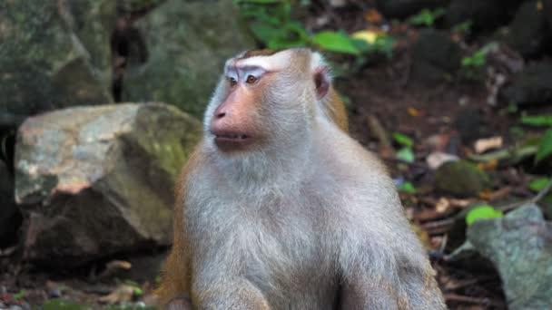 opice v deštném pralese na skalách