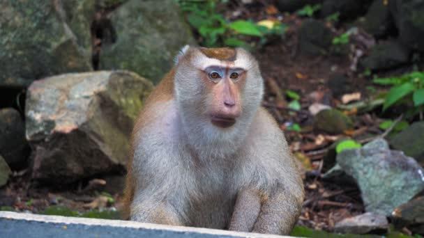 opice v divoké, rainforest džungle v Asii