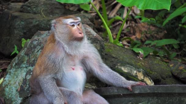 portrét pro dospělé opice pod stromem v tropické džungli