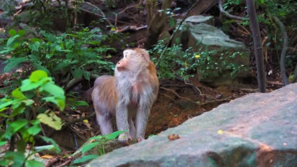 monkey stands on a rock in the rainforest. jungle, the habitat of wild monkeys