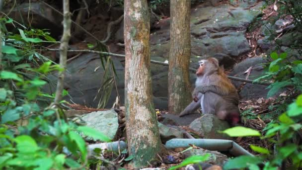 wild monkey goes into the jungle, natural habitat, wild animals