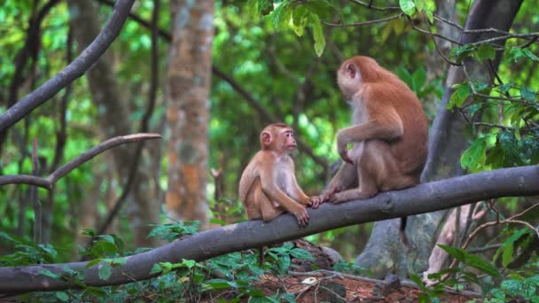 monkeys in a rainforest are sitting on a branch