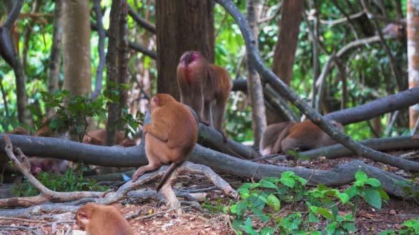monkeys in the jungle on a tree branch, tropics