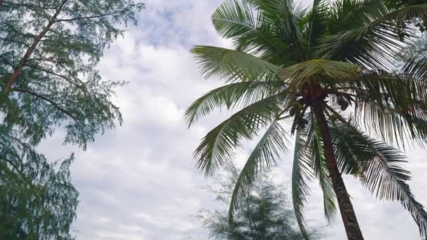 Palma na tropickém ostrově
