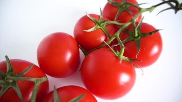 Zweig einer frischen roten Tomatenkirsche, isoliert auf weißem Hintergrund