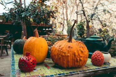 cozy still life with pumpkins in autumn garden