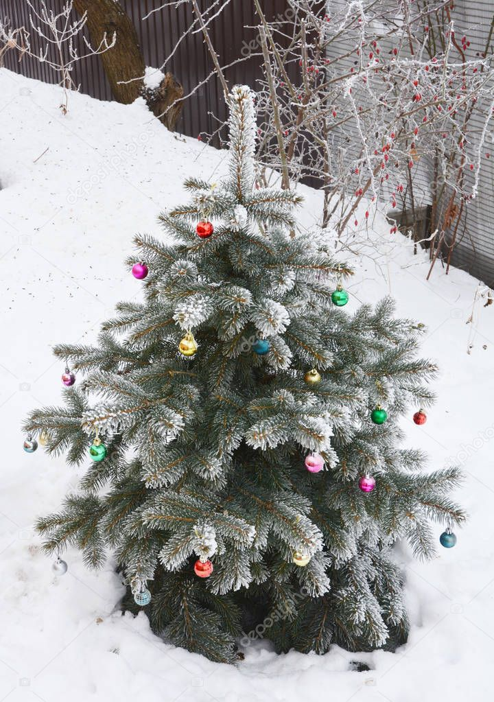 Christmas tree with snow, decoration christmas colorful balls in the garden outdoors.