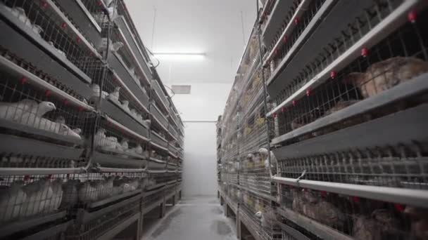 Cages with doves and quails in hennery. Poultry farm view