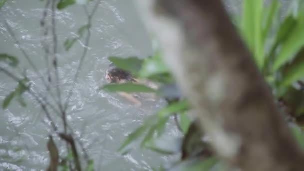 Nahý mladík s dlouhými vlasy je plavání v řece v tropickém pralese
