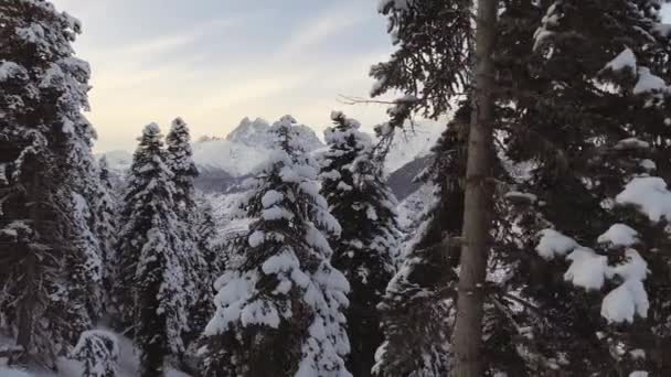 Amazing winter landscape of snow capped pine trees and marvelous mountains