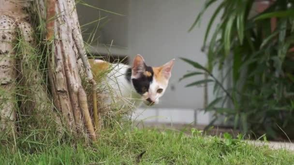 Kätzchen mit gelb-schwarzem Fell steht auf Gras und schaut neugierig aus dem Baum
