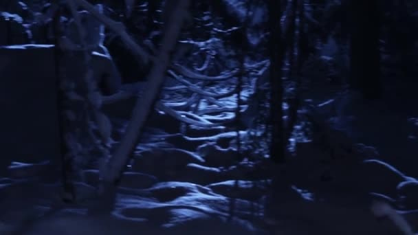 Wonderful cold winter pine trees covered with snow shown in blue moon light.
