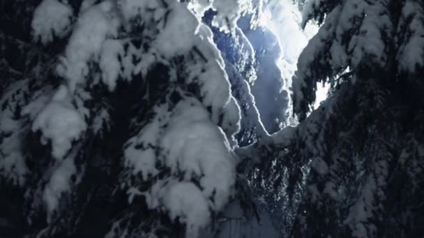 Fascinating view of branches of pine trees covered by snow at cold winter night