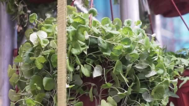 Csodálatos zöld virágzó növények cserepes cserépben, fehér fémes állványon