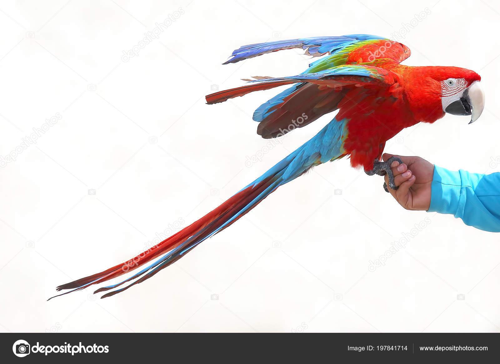 άνδρες μεγάλο πουλί φωτογραφίατεράστιο πουλί σφιχτό μουνί