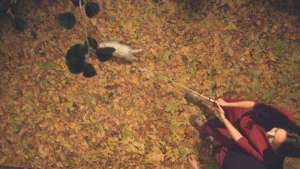A young couple with a dog among the yellow leaves.Slow motion. Top view. A guy, a girl and a dog walk in the evening among the yellow leaves.The guy tears off the apple from the branch and gives the girl.The camera moves over them.