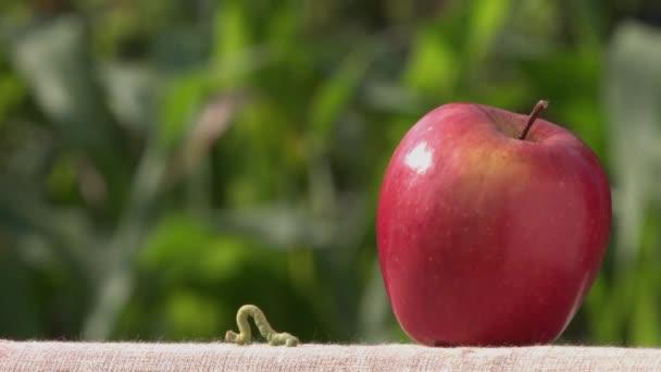Caterpillar és apple.aterpillar feltérképezi a piros Alma tábla. A háttérben van zöld fű. aterpillar squirms.
