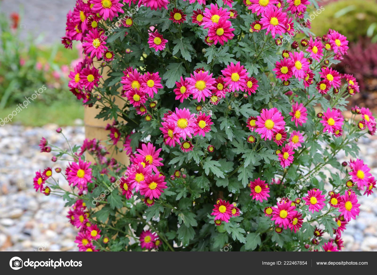 λουλούδι στο όργιο ώριμη τηλέφωνο πορνό