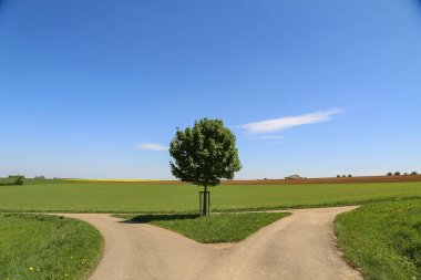 Summer landscape with a tree in the center