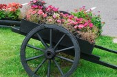 Beautiful flowers in a beautiful chariot as a decoration of the yard. Gardening and home comfort. Stock photo for design