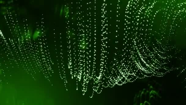 Dynamická pozadí abstraktní zářící částic s zářící bokeh jiskří. Tmavě zelená složení s kmitajícími světelná částice. Science-fiction. Hladké animace smyčkou. 3