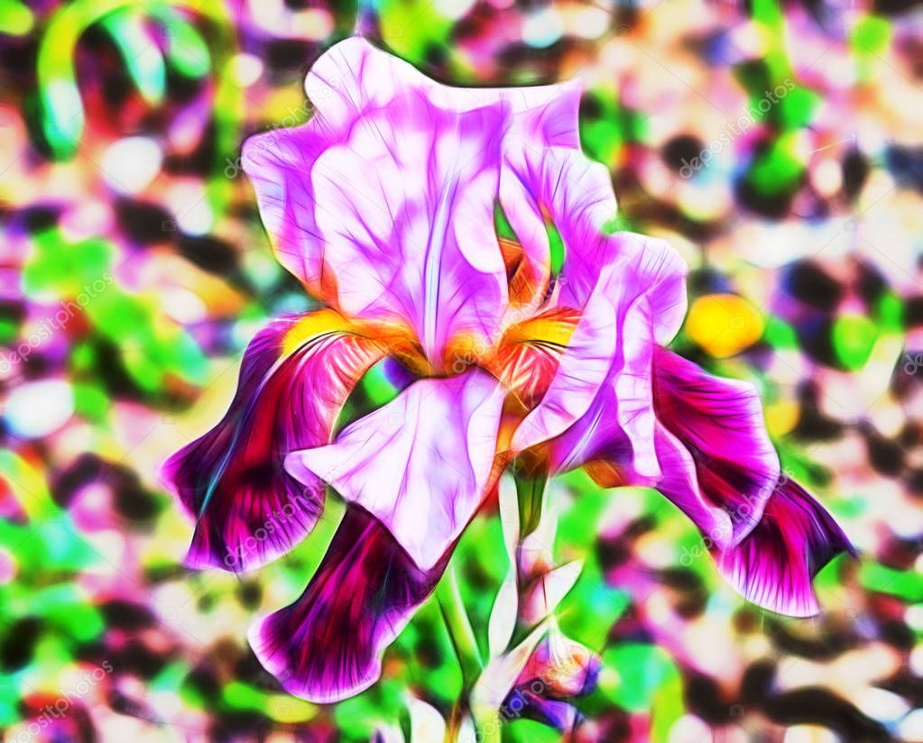 abstract very beautiful purple flower