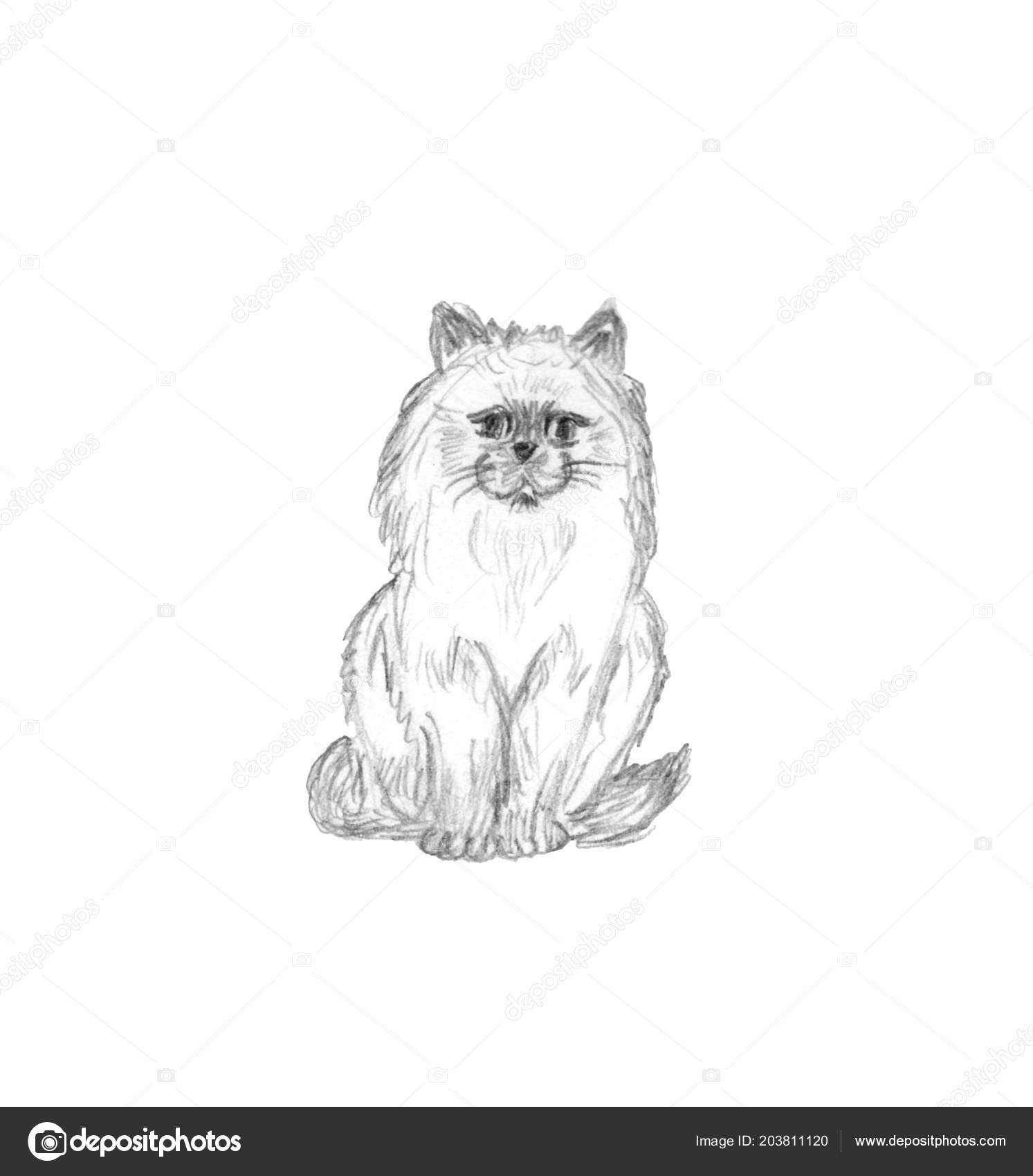 Sitting fluffy cat isolated white background pencil sketch domestic cute stock photo