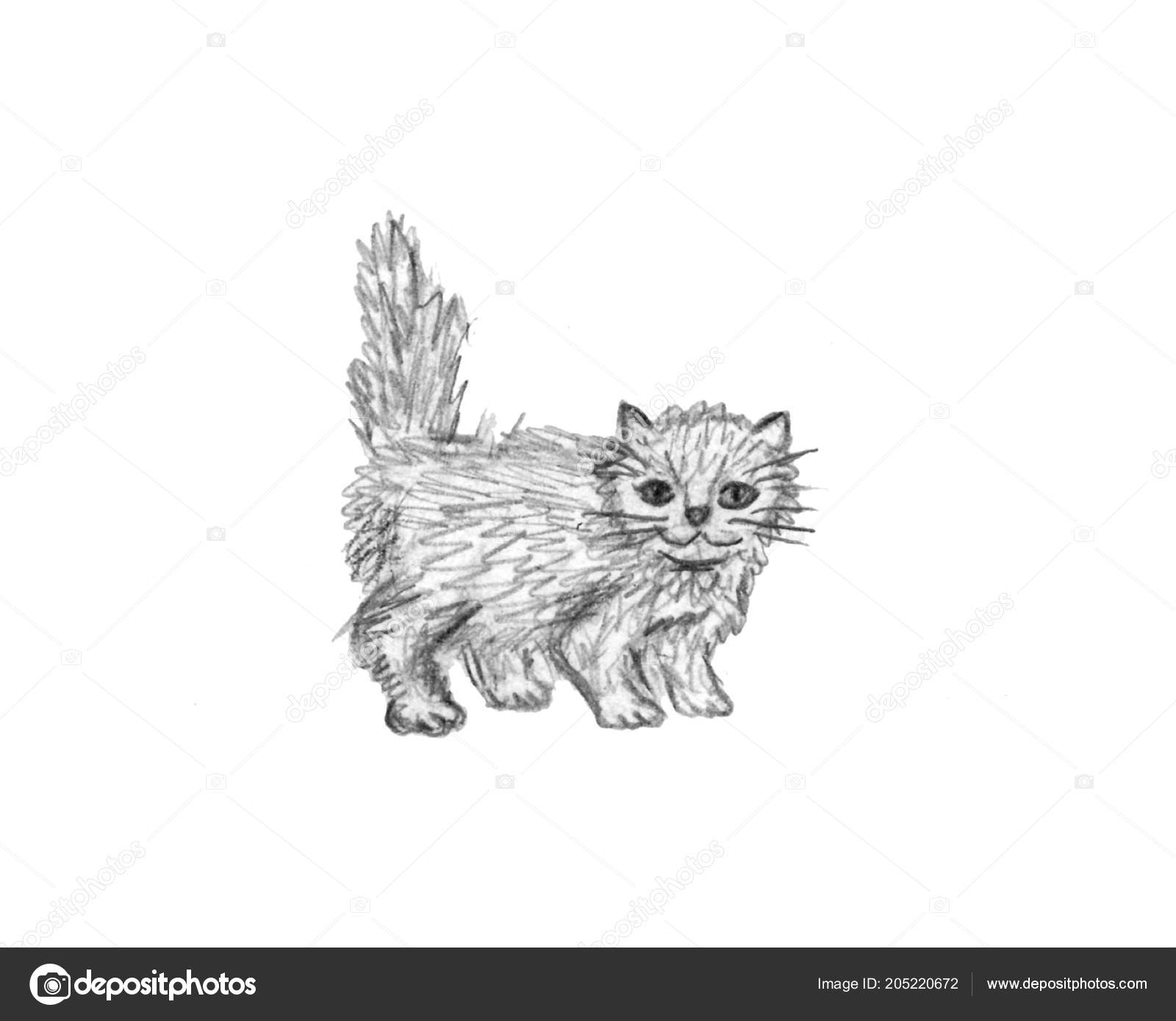 Rucne Kreslene Ilustrace Kocky Izolovane Bilem Pozadi Male Chlupate