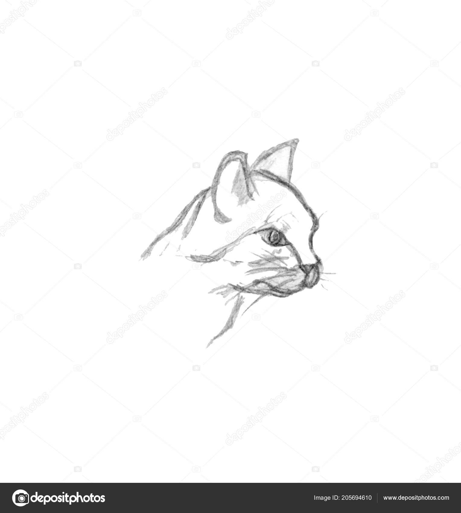 Kocici Hlavy Izolovanych Bilem Pozadi Rucne Kreslene Ilustrace