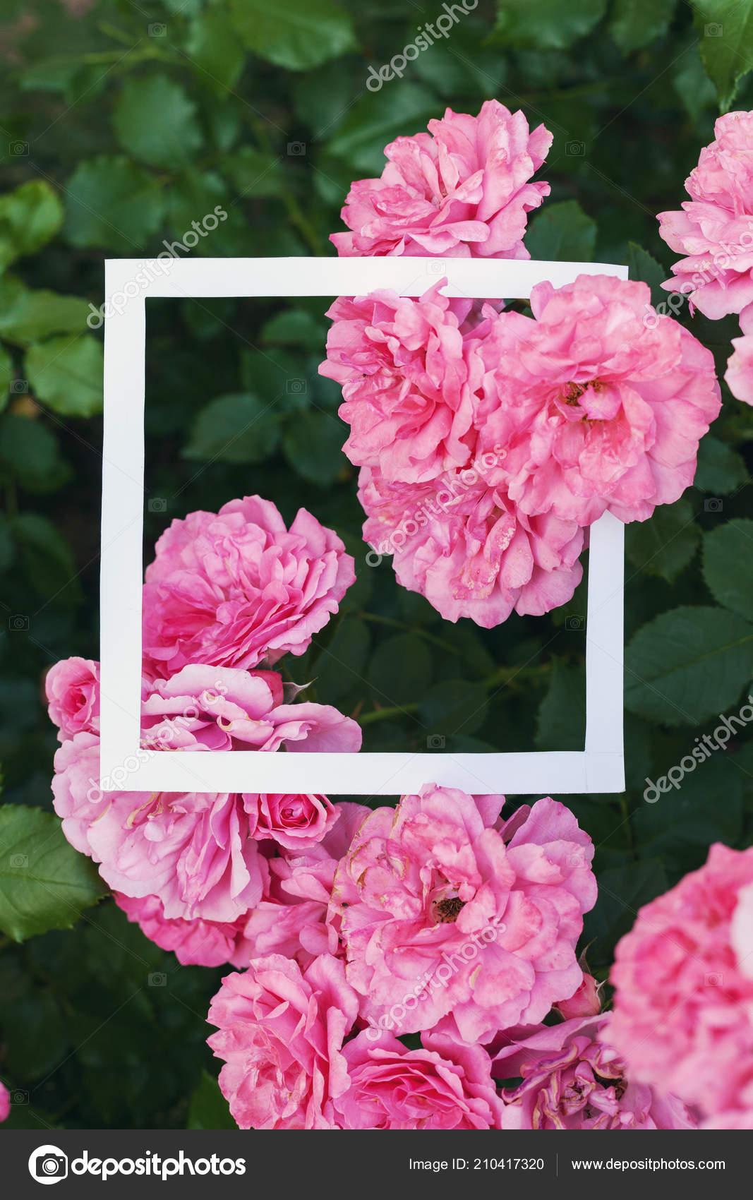Kreative Und Natur Konzept Blüten Rosa Rose Mit Papier Karte