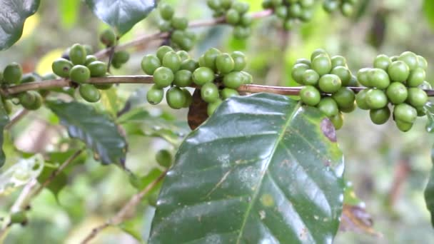 Surový čerstvý zelený fazolový strom v pozadí přírody