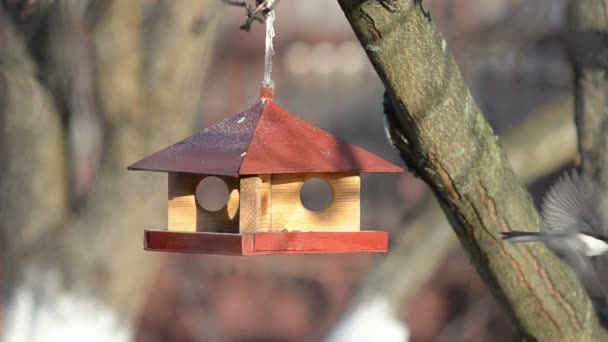 Kis madarak etetés a jászolban