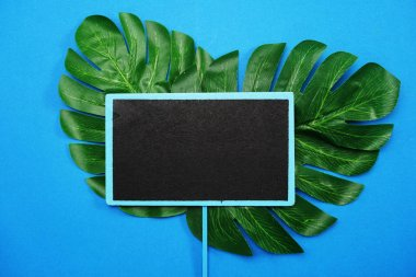 tropical leaves monstera and space copy on blue background