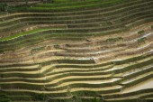 Fotografie The image of terraced field is as beautiful as the oil painting. The curved lines of terraced rice field during the watering season at the time before starting to grow rice in Mu Cang Chai