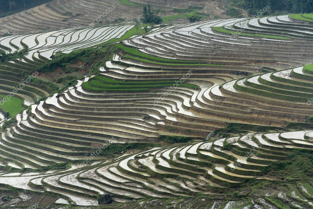 The image is as beautiful as the oil painting of terraced field. Curved lines of Terraced rice field during the watering season at the time before starting to grow rice in Mu Cang Chai in Yen Bai Province