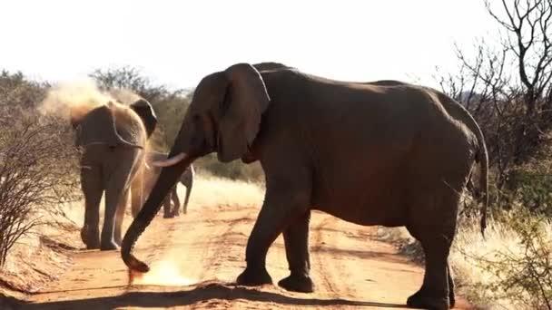 Az elefántok földet szórnak a hátukra, hogy védjék a napot és a bogarakat Botswanában.