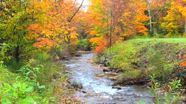 Stream Burbling Through Vibrant Trees During Fall Colors in Vermont