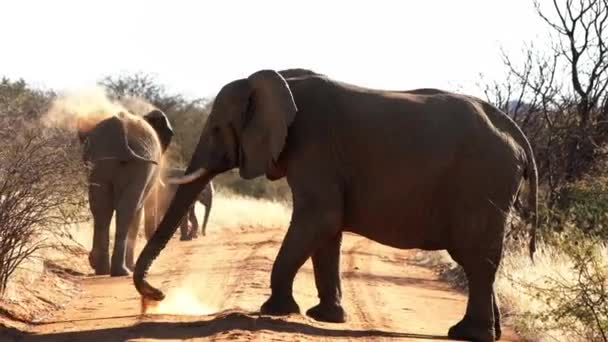 Elephants are seen throwing dirt upon their backs for sun and bug protection