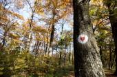 Piros szív fehér alapon festett fa, erdő