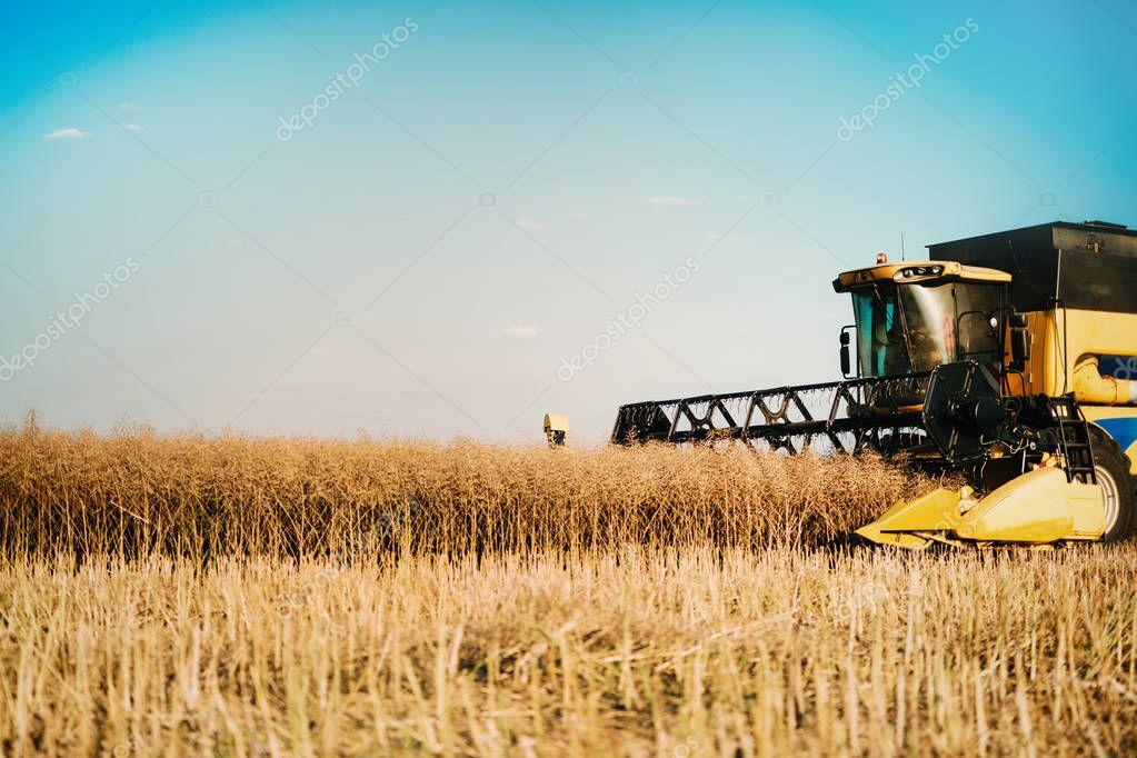 Picture of combine harvester machine harvesting ripe crops