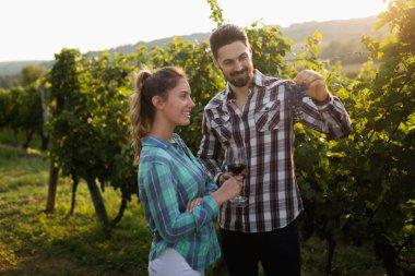 Winegrowers harvesting grapes in vineyard