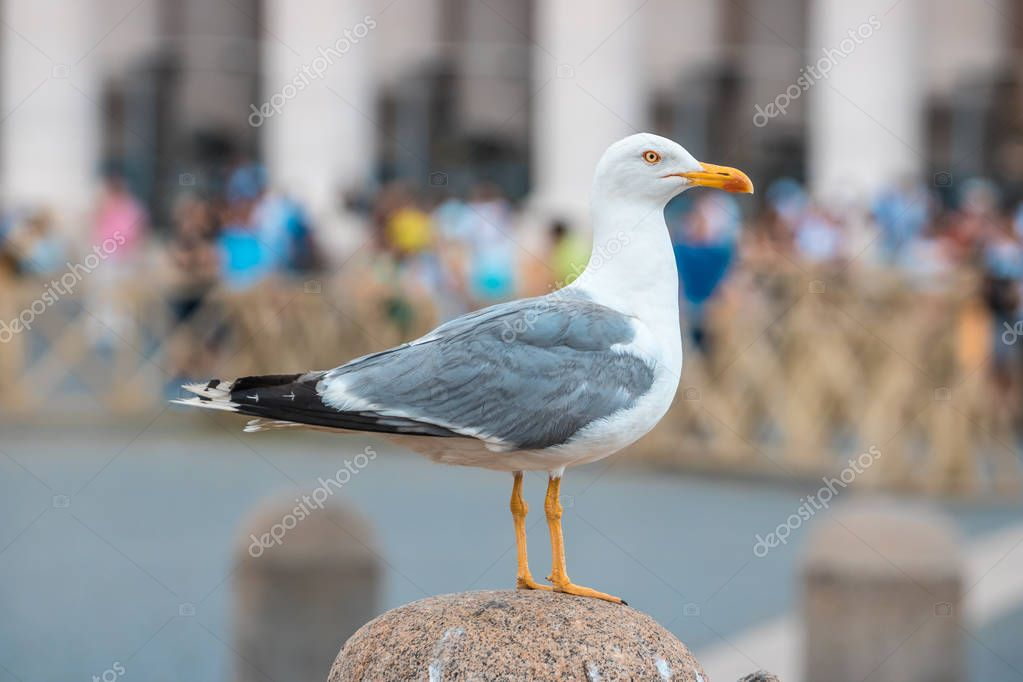 Seagull sitting on a statue, Rome, Italy.