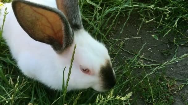 Bello giovane piccolo coniglio sullerba verde in giorno di estate. Coniglio bianco sveglio su priorità bassa dellerba. Close-up.