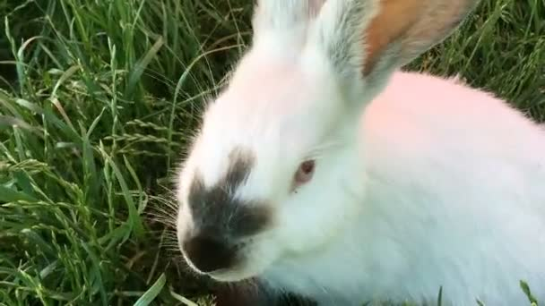 Beautiful young small rabbit on the green grass in summer day. White cute rabbit on grass background. Close-up.