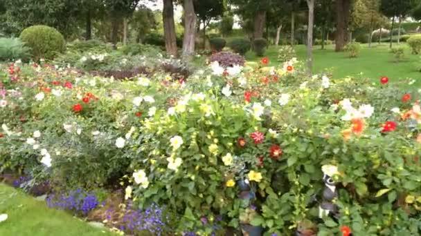 Blumenbeet mit hellen Blumen im Park. Bunte Schönheit der Natur. Nahaufnahme.